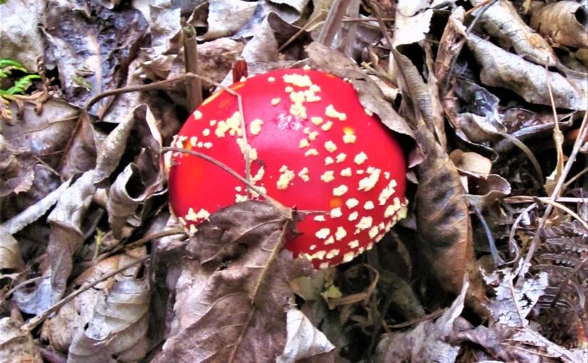 A Mushroom Anthem
