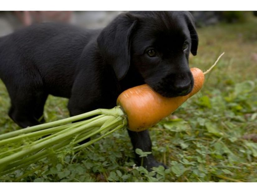 Baby Vegetables And Puppy Dogs