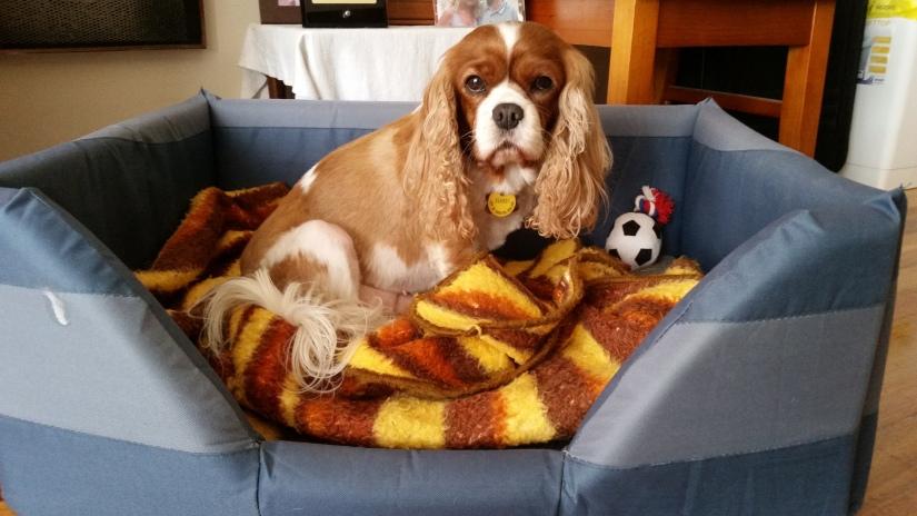 Doggie Minder