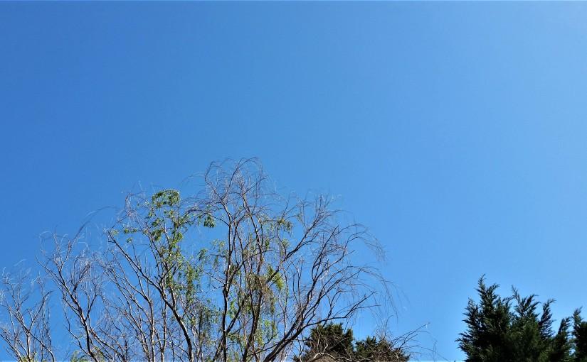 Haiku. Sky Blue