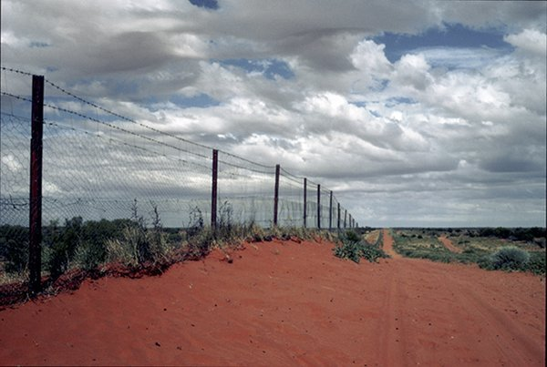 Climbing A Rabbit Proof Fence