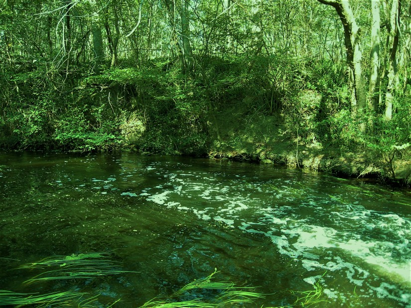Haiku: Our River