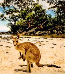 img446 (2) NSW Coast...