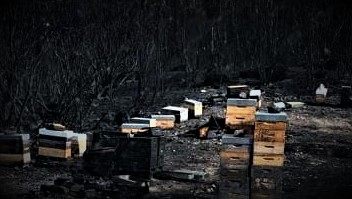 Busy Bees Will Rebuild OurHives