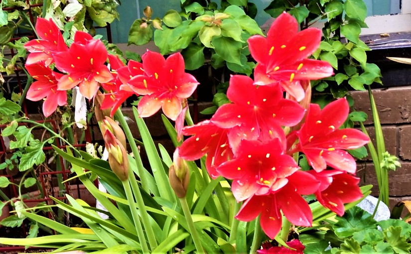 Day Lily, Love and AnotherYear