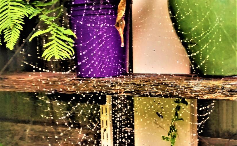 Spider's Domain