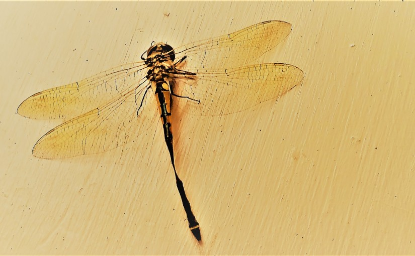 A Dragonfly Lives Six Months