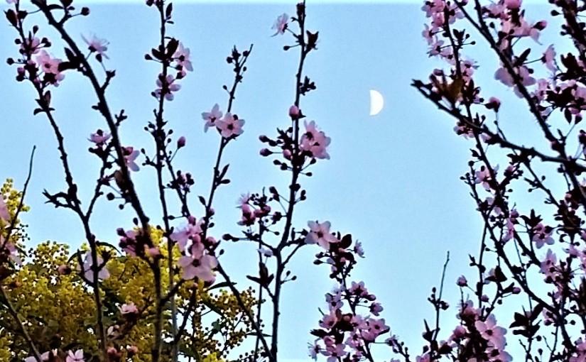 Blossom Over Jerusalem – IvorSteven