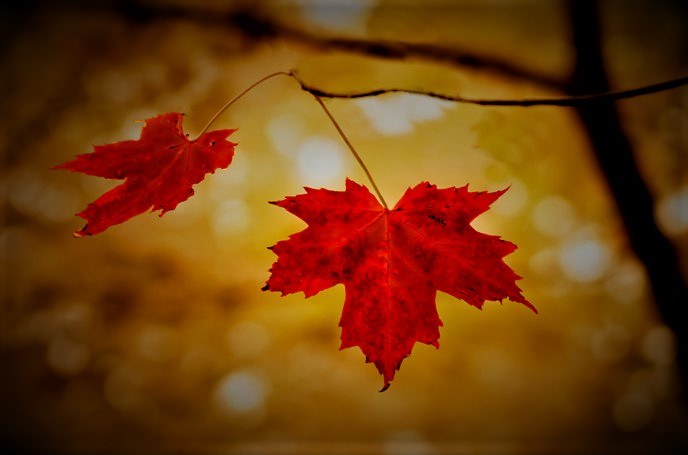 The Leaves AreRed