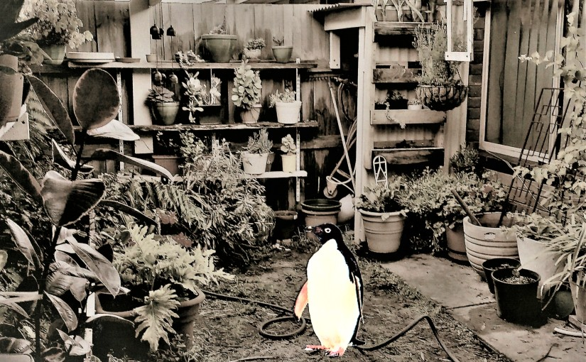 There's a Penguin In My Courtyard