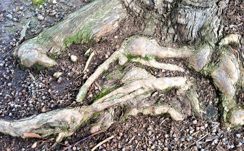 A Tree Roots' Exposed Colours