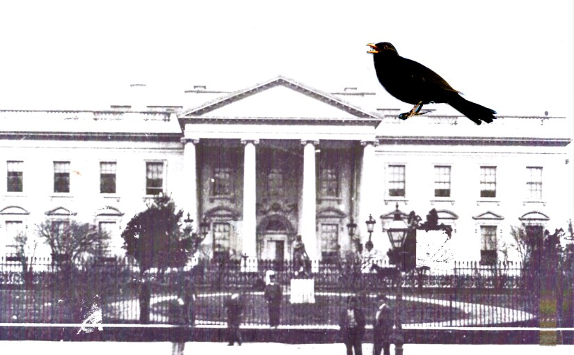 A Blackbird Sings