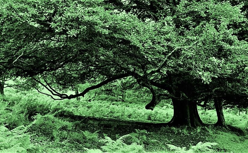 Tree,  a Haiku