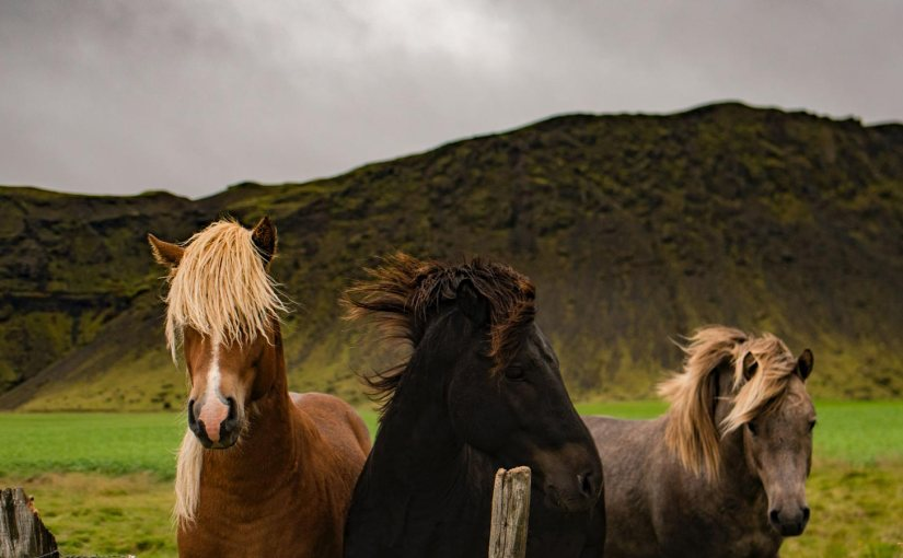 """My poem, Horses for Courses, is up at 'Spillwords"""""""