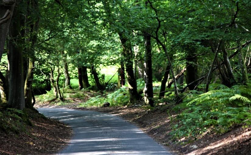 The Path (aSenryu)