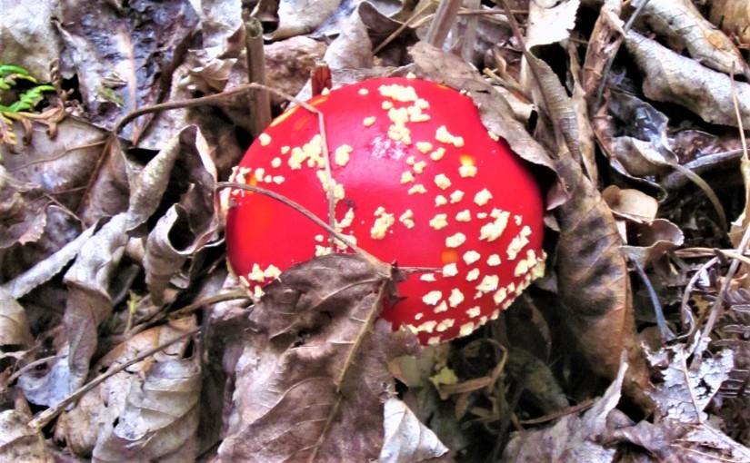New Mushrooms